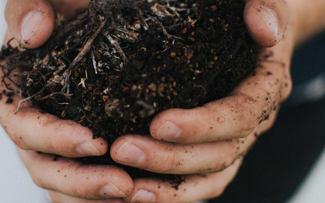 16. November 2018 – Pflanzenkohleanwendung in der nachhaltigen Landwirtschaft