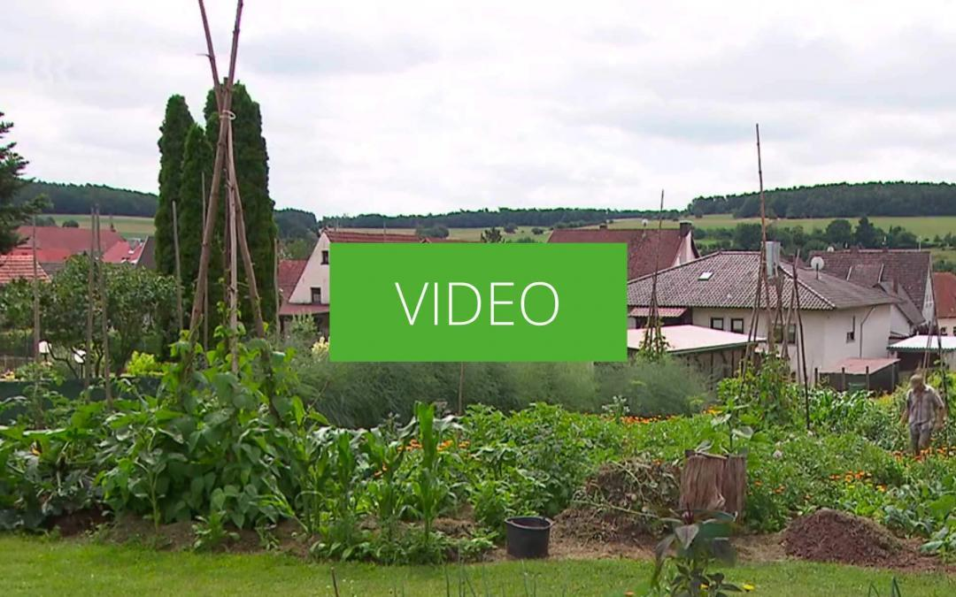 Pflanzenkohle als Bodenverbesserer