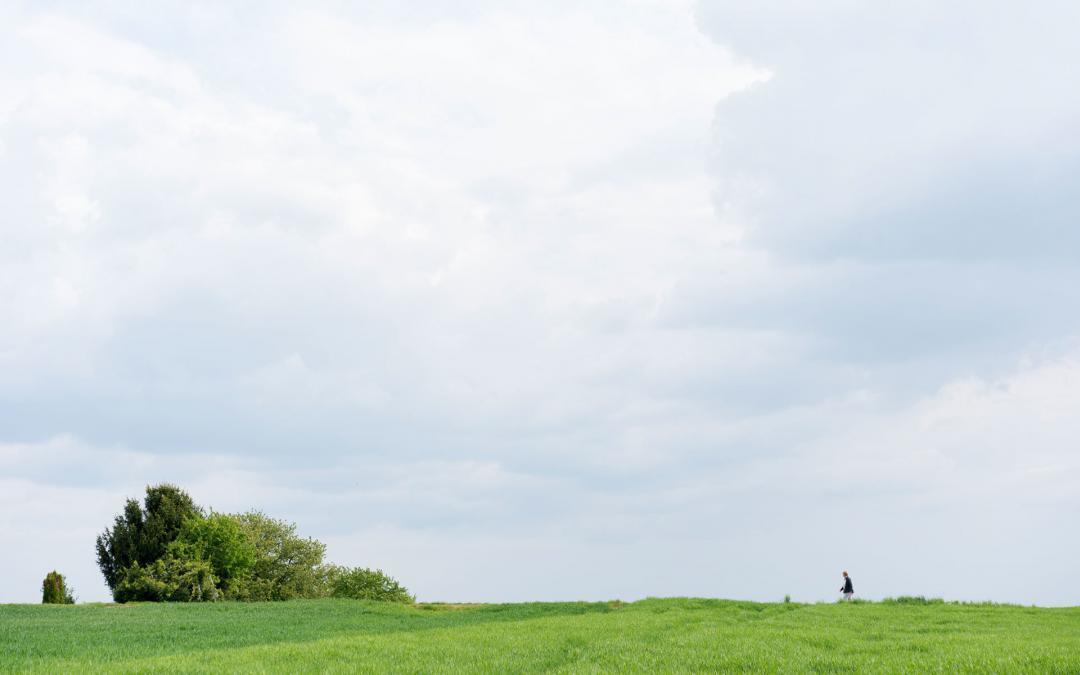Bodenverbesserung mit Pflanzenkohle – aktueller Wissensstand