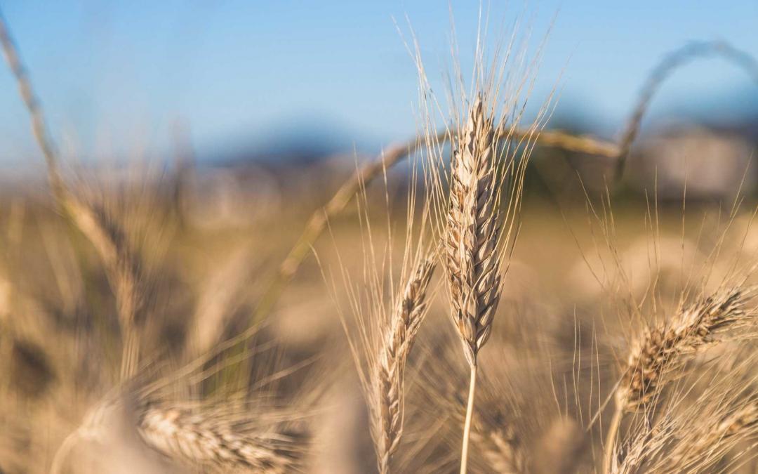 Wie und wo ist Pflanzenkohle zugelassen