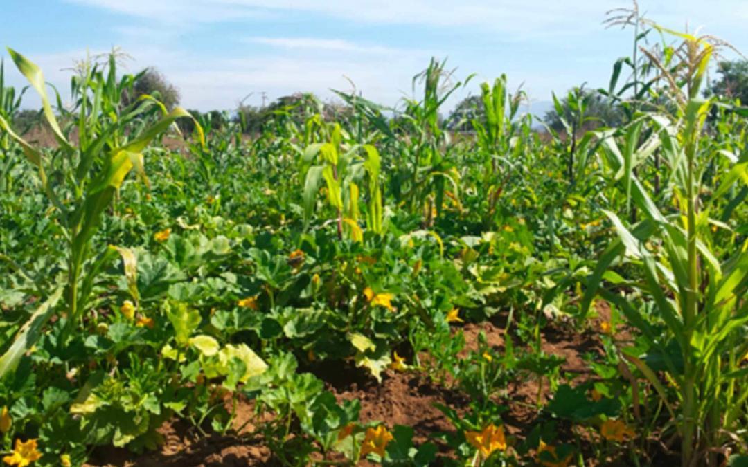 Mit Milpa und Pflanzenkohle zu Humus