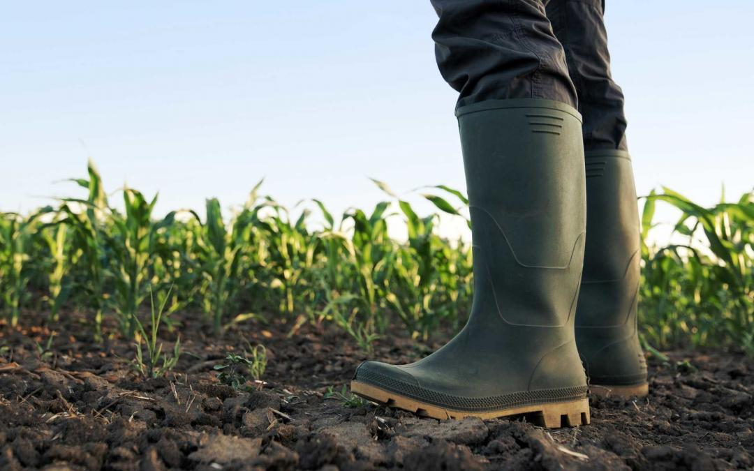 Schonend landwirtschaftliche Böden aufwerten