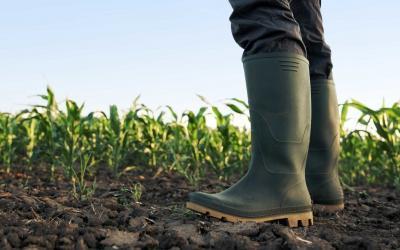 Upgrading agricultural soils with TerraPreta