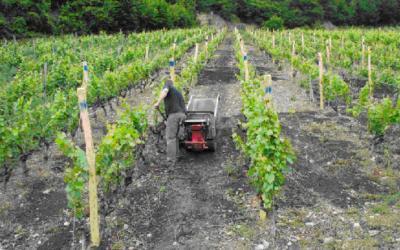 Pflanzenkohle im Europäischen Weinbau