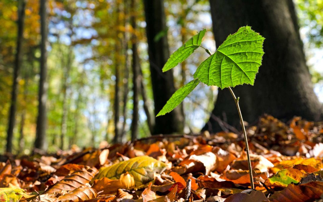 Biochar as a substitute for peat and perlite in reforestation