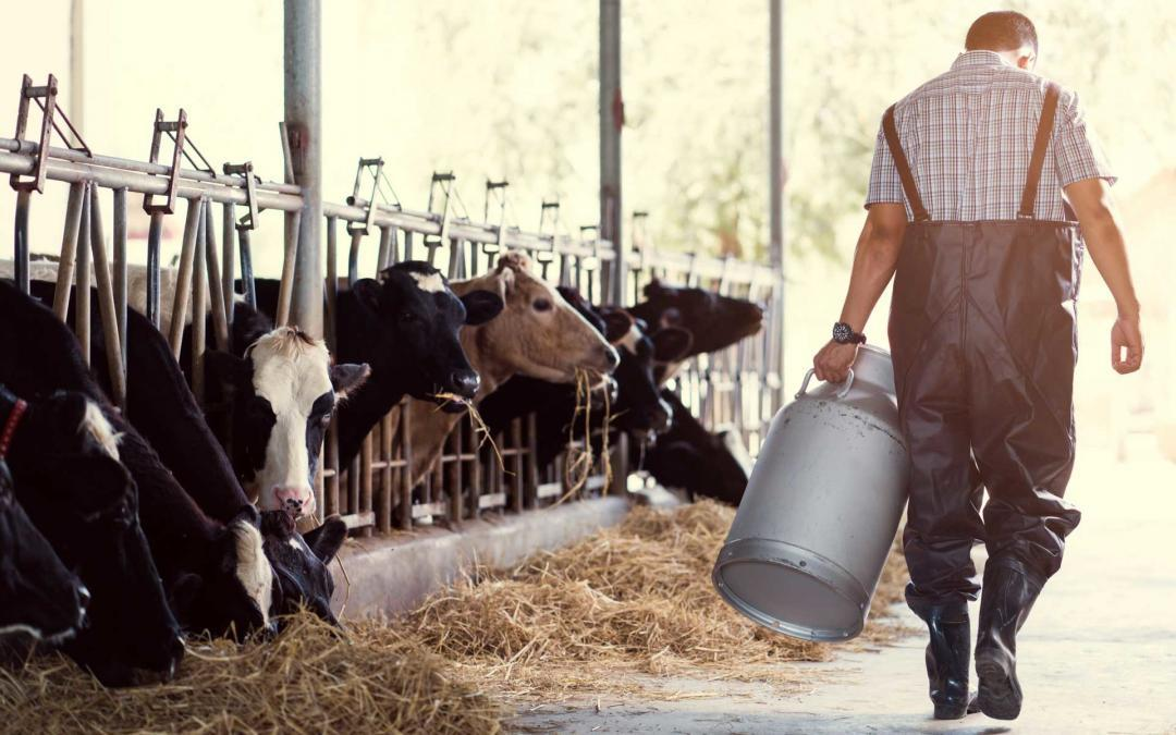 Pflanzenkohle in der Tierfütterung – Eine Übersicht