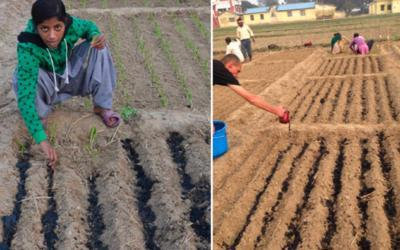 Wurzelapplikation von Pflanzenkohle – hohe Ertragssteigerung mit wenig Pflanzenkohle